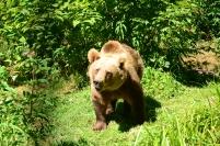 El primer oso que vimos :D