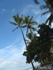Palmas Parque Tayrona