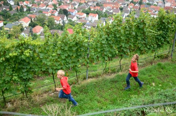 Mientras los adultos descansan y disfrutan de un buen vino, los niños se divierten entre los viñedos.