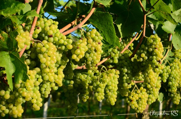 WeinwanderungXIV