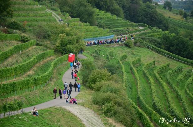 Caminos entre los viñedos.